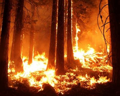 В Севастополе продолжает действовать особый противопожарный режим