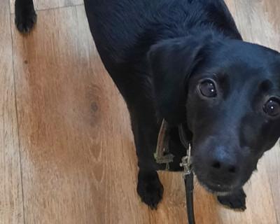 Пользователи сети ищут хозяев собаки, попавшей в ДТП под Белогорском