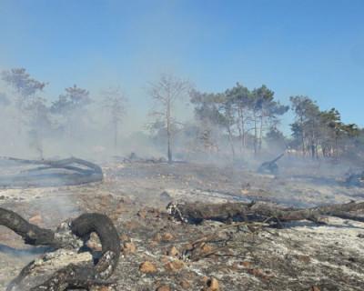 В Севастополе загорелся лес