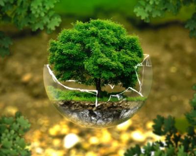 Пусть растут деревья, а не свалки в Севастополе