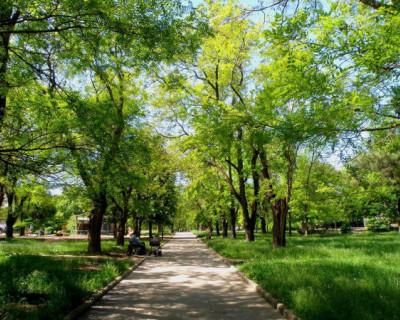 В столице Крыма приведут в порядок парки