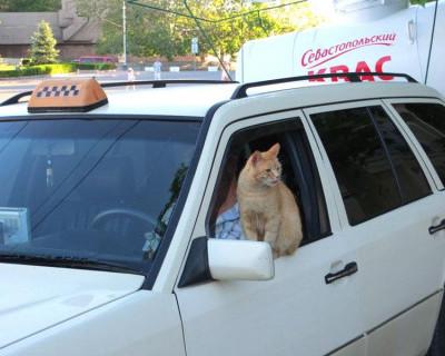Внимание! Официальные тарифы на такси в Севастополе
