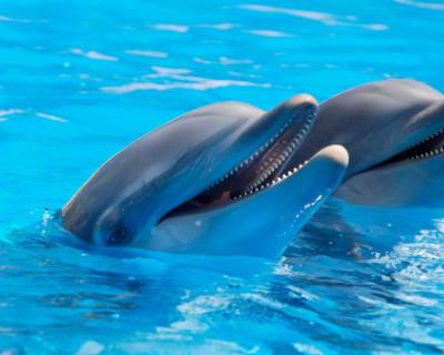 Крымские дельфины получат паспорта