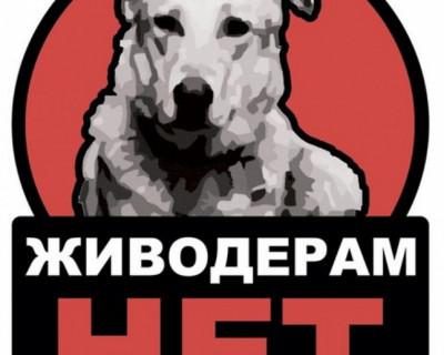 УМВД Россию по Севастополю: Живодеры будут найдены и наказаны по всей строгости УК РФ
