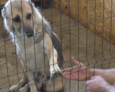 Как живет севастопольский городской приют бездомных животных (ВИДЕО)