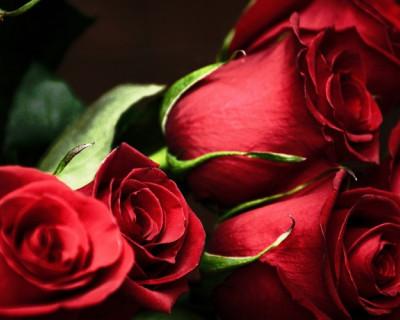 Внимание мужчин! Цены на цветы в Севастополе (фото)