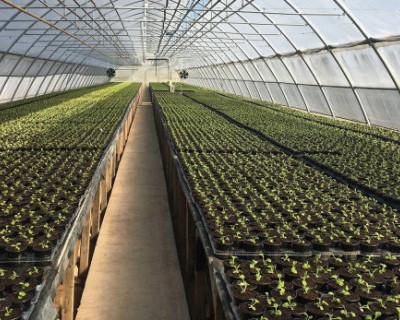 В Севастополе поддержат тепличные хозяйства