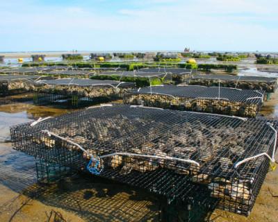 В Севастополе создадут кластер аквакультуры