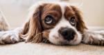 Житель Севастополя зверски убил беззащитную собаку (ВИДЕО)