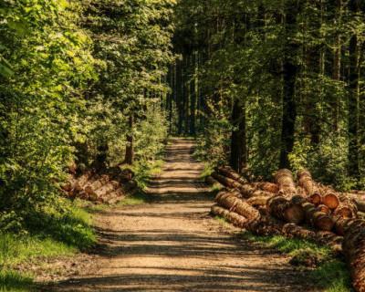 С 1 января 2022 года из России запретят вывоз необработанной древесины