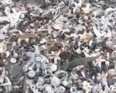 На Камчатке отравлено морское побережье (ВИДЕО)