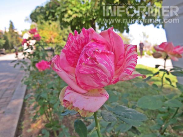 Севастополь жара лето погода