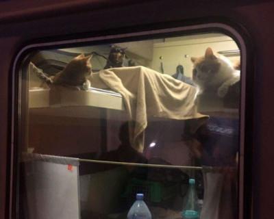 Пассажир выкупил купе для своих котов в поезде Москва—Анапа