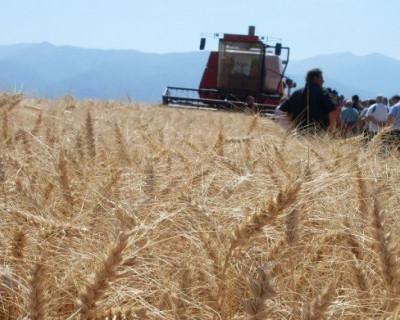 Украина стала главным покупателем продукции крымского агропромышленного комплекса