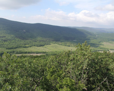 В Севастополе создают информационную систему контроля за вырубкой деревьев