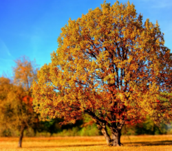 В Крыму наблюдается превышение температуры на протяжении всего октября