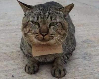 В долгах как в шелках: блудный кот вернулся домой