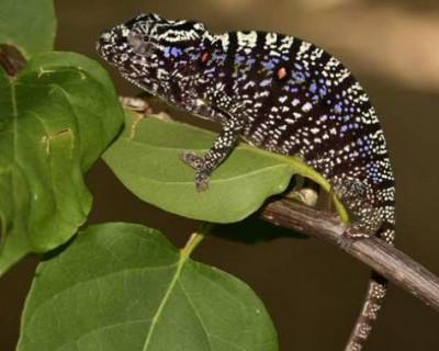 Ученые нашли вымершее животное (ВИДЕО)