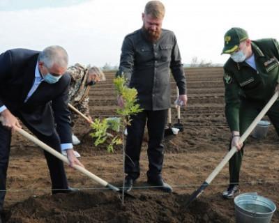 В Бахчисарайском районе высадили 10 тысяч саженцев крымской сосны
