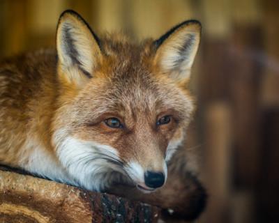 Севприроднадзор напомнил о запрете на содержание диких животных в домашних условиях