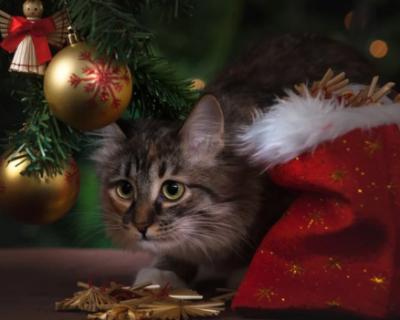 Севастополь начнут украшать к Новому году со следующей недели