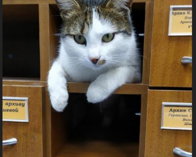 Коты Херсонеса отмечают свой праздник