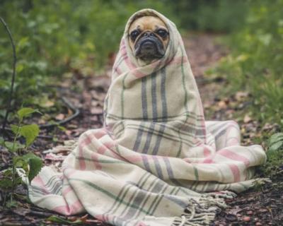 Губернатор Севастополя поручил навести порядок в приюте бездомных животных