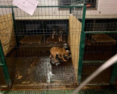 Губернатор Севастополя заявил, что у города нет денег на строительство приюта для животных