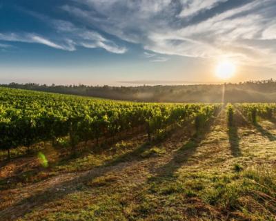 Балаклавские вина попали в топ-10 лучших брендов федерального конкурса «Вкусы России»