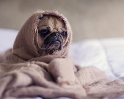 В Севастополе центр передержки бездомных животных могут сделать государственным