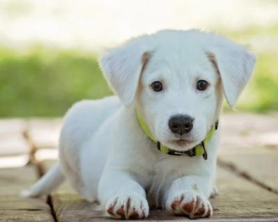 В Заксобрании Севастополя разработали законопроект о защите животных