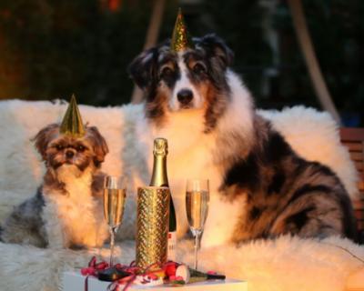 В Крыму выросла стоимость продуктов к новогоднему столу