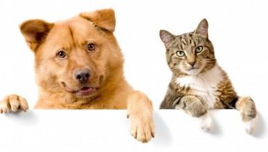 Вы живёте в Севастополе? У вас есть кошка или собака? Тогда не пропустите 21 марта!