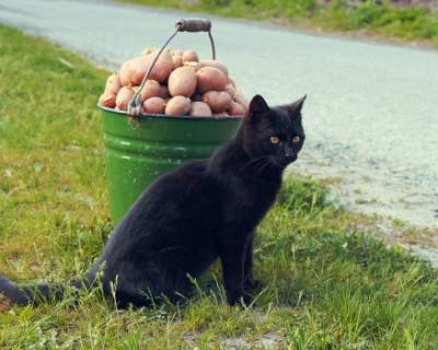 Как картошка посадит россиян