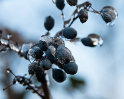 В ближайшие сутки в Севастополе прогнозируется мокрый снег