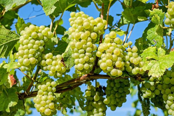 В Крыму отчитались о небывалом урожае плодов и ягод