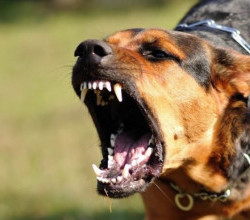 Собака укусила керчанку за лицо