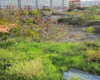 Фисташковую рощу в Севастополе отстояли в суде