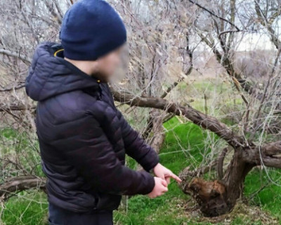 Трое крымчан задержаны за торговлю наркотиками