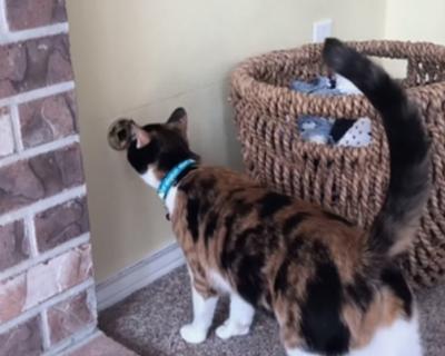Кошка спасла семью от взрыва газа