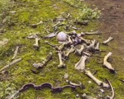 На картах Google в Чернобыле обнаружили скелеты