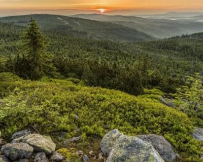 ООО «Кордон Мекензи» придется отдать 6,1 тысячи га лесов