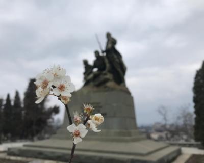 Цветочный Севастополь