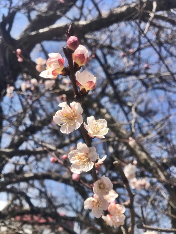 в Севастополь пришла весна