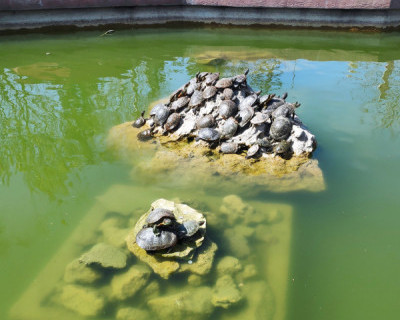 Севастопольские черепахи у «Муссона» пережили зиму