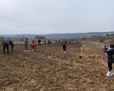 В Крыму посадили саженцы красного дуба