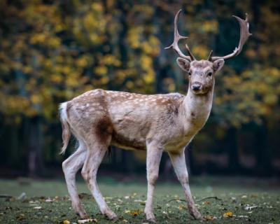 В Севастополе создадут переходы для диких животных