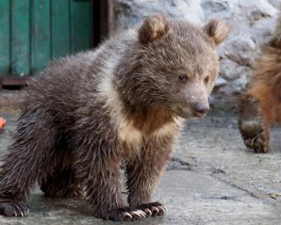 В зооуголке Симферополя родился медвежонок