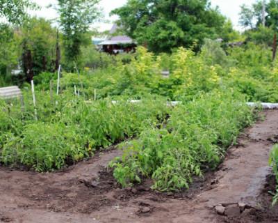 В Севастополе участились кражи в садоводческих товариществах