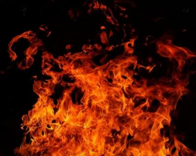 В Севастополе во время пожара погибла собака